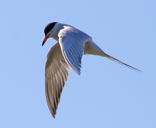 """Don't call me a bigot, but I think he should live on his own or stay with his mother. He cannot room with me, because one good tern deserves another."""