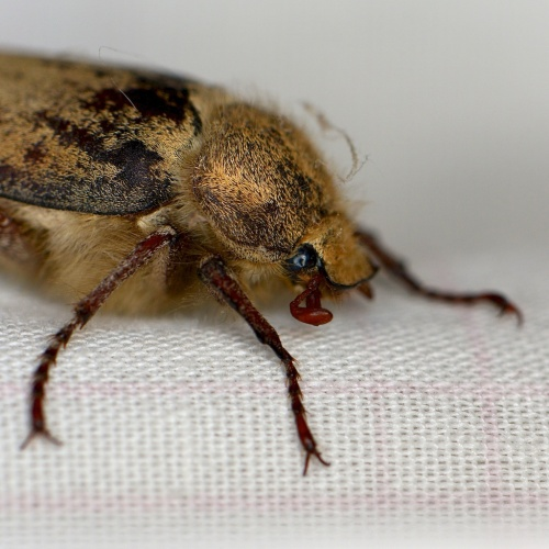 The ringlight will become very useful for macro photography if I ever calm down and use a freakin' tripod.