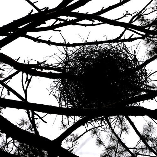 A nest, about 80 feet in the air...