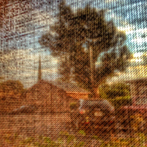 tree through screen obc