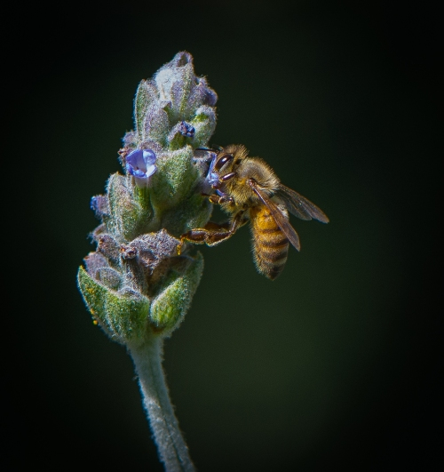 Backyard Bees-0178-2