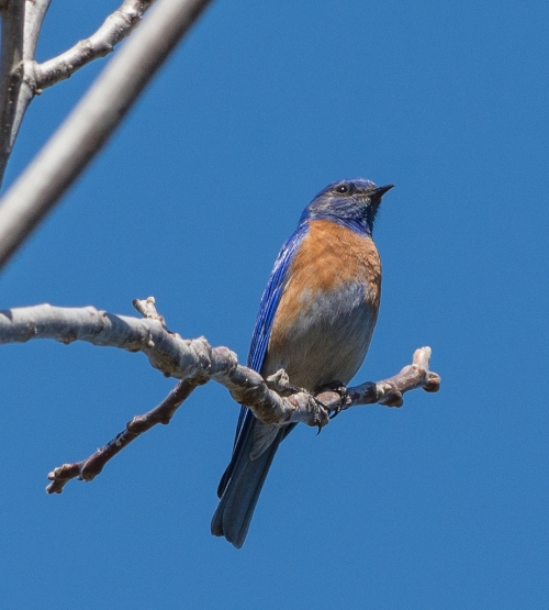 ...And a bluebird too.