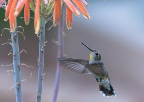 backyard birds-3198