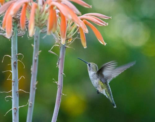 backyard birds-3205