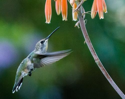 backyard birds-3218