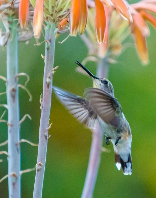 backyard birds-3248