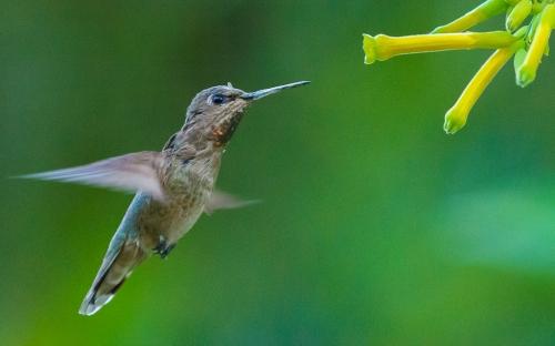 backyard birds-3288