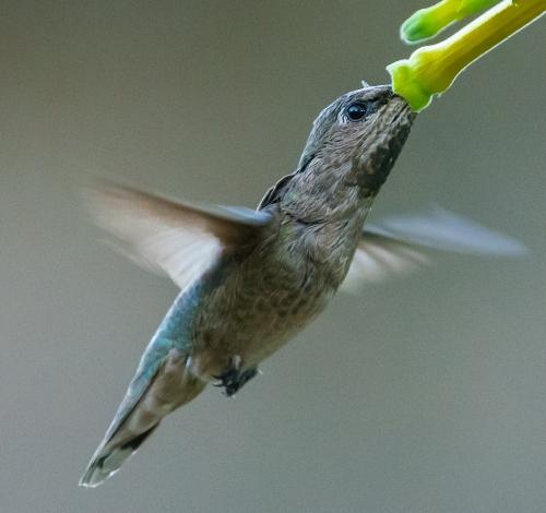 backyard birds-3293