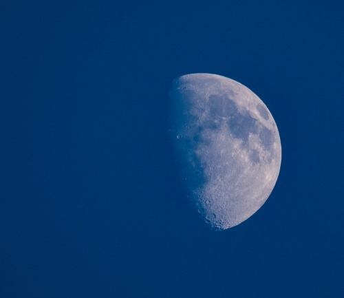 There weren't many birds in the backyard during the few minutes I had to try the lens, but there was  a moon.