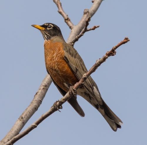 Soule Park Birds-0892-2