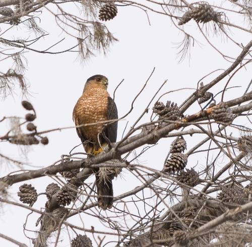 Soule Park Birds-0906-2