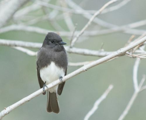 Soule Park Birds-0926-2
