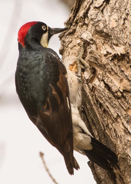 Soule Park Birds-0938-2